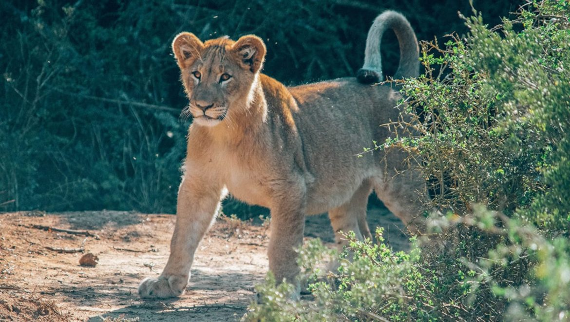 Top 10 best Wildlife Holiday Destinations in the World